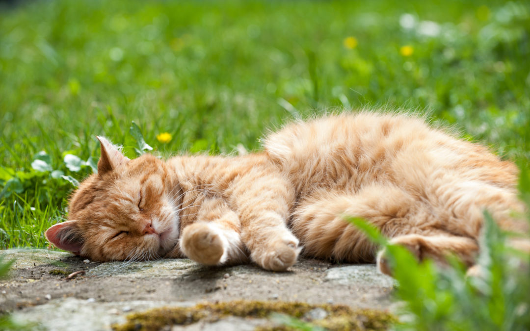 INCORPORATING REST IN YOUR DAILY ROUTINE AND PREPING FOR SLEEP